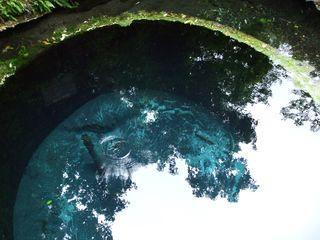 柿田川湧水②201105 020