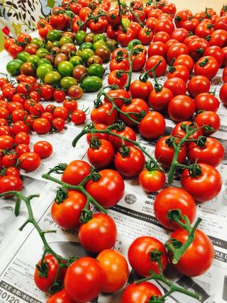 農園トマト