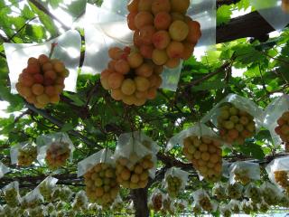 飯塚果樹園1
