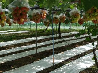 飯塚果樹園2