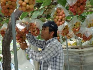 飯塚果樹園4